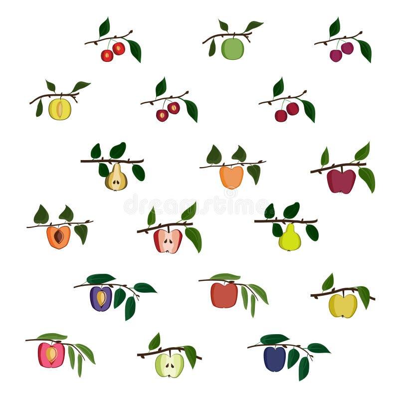 Groeiend boomfruit royalty-vrije illustratie