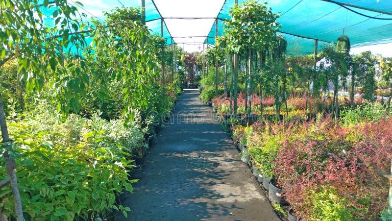 Groeiende bloemen en groene installaties in een serre Productie en cultuur van bloemen Jongelui die in een serre planten stock afbeelding
