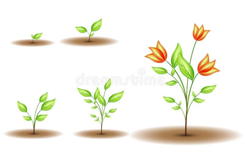 Groeiende groene bloem royalty-vrije illustratie