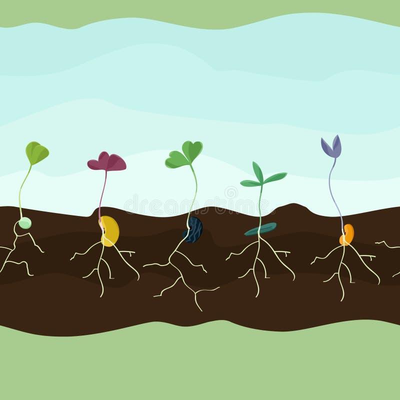 Groeiende zaden vector illustratie