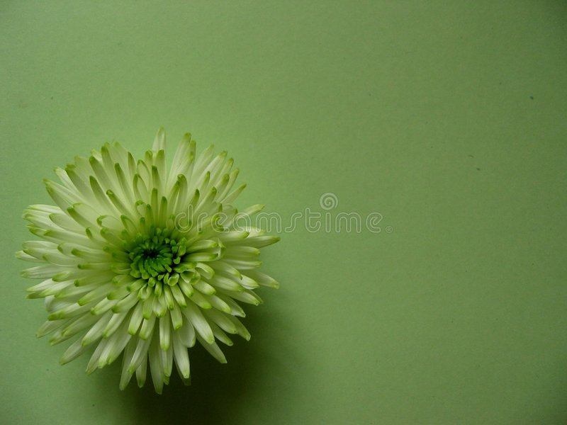 Groen royalty-vrije stock foto