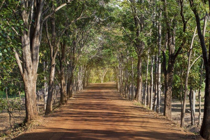 Groen aard bos Mooi bos met landweg bij zonsondergang Kleurrijk landschap met sinaasappel van de bomen de landelijke weg stock afbeeldingen