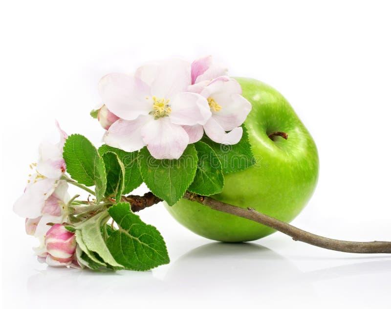 Groen appelfruit dat met roze bloemen wordt geïsoleerdg royalty-vrije stock afbeelding