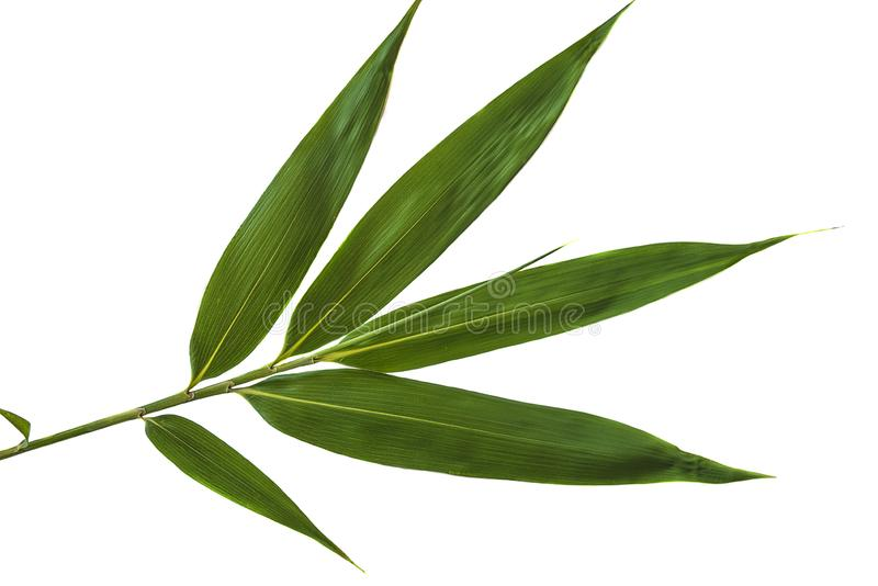 Groen bamboeblad stock afbeelding
