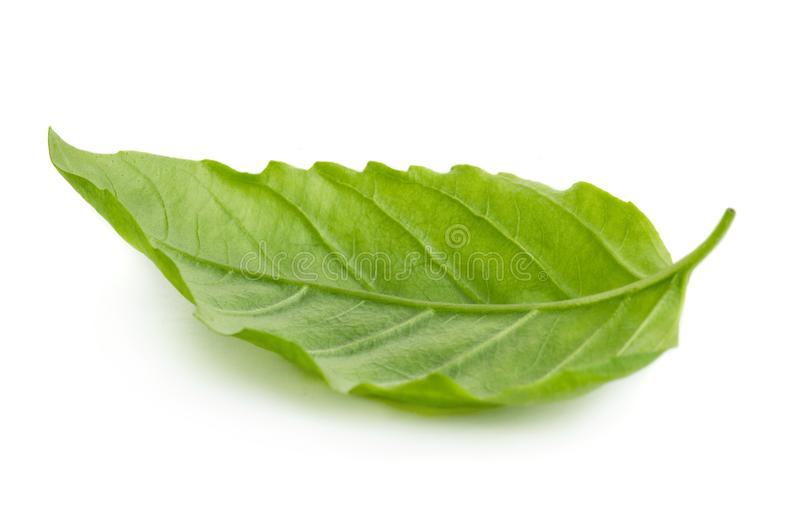 Groen basilicumblad royalty-vrije stock foto's