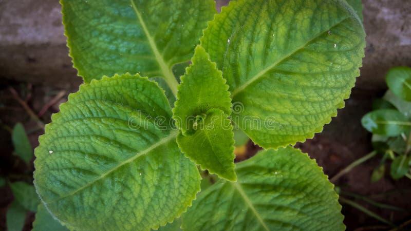 groen blad royalty-vrije stock afbeelding