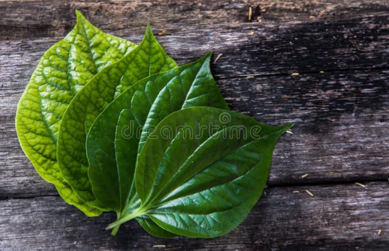 groen blad stock foto