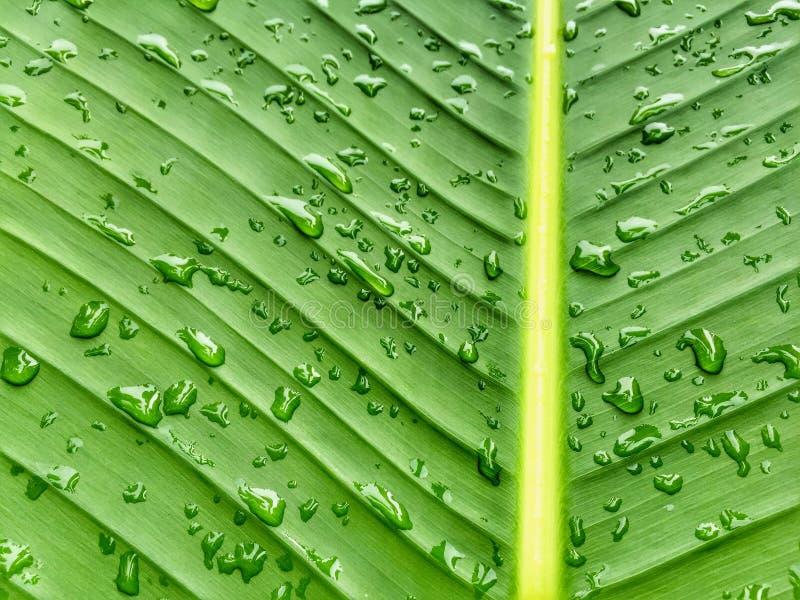 groen blad stock fotografie