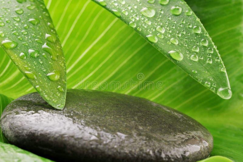 Groen blad en grijze steen royalty-vrije stock foto