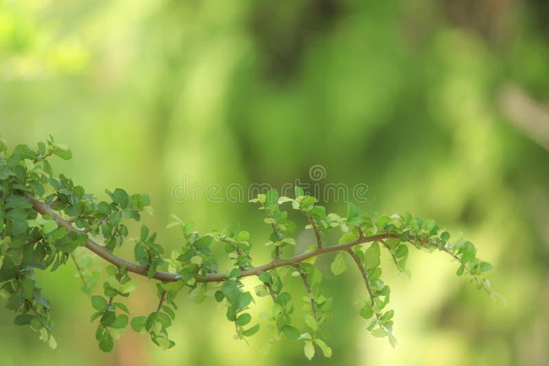 Groen blad en prachtig verdraaide takken stock foto