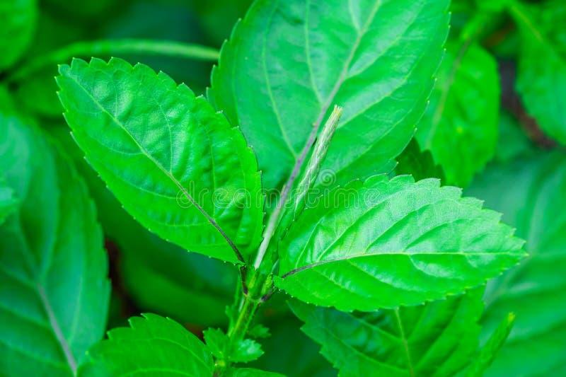 Groen blad kruiden met zonlicht royalty-vrije stock afbeelding