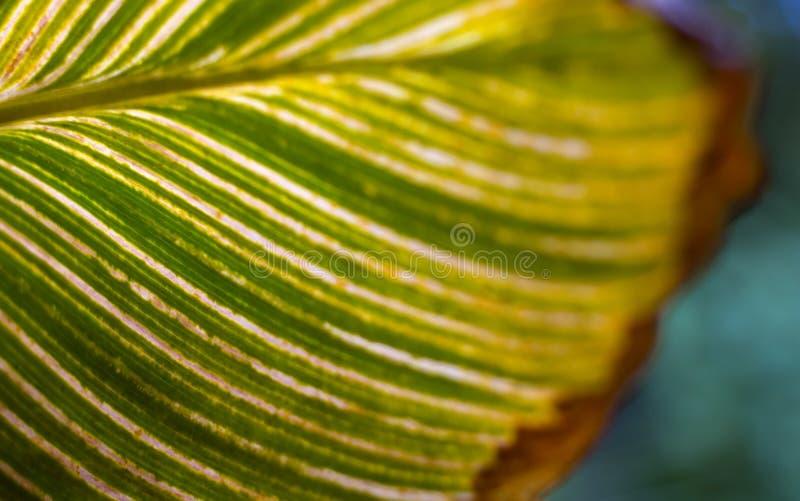 Groen blad met aders. Creatieve aard. stock afbeelding
