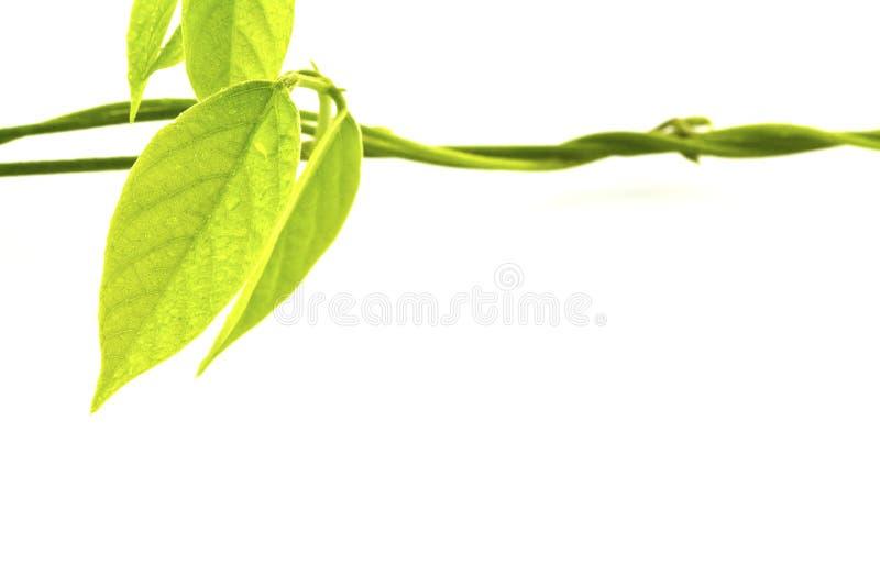 Groen blad met dalingen van water royalty-vrije stock afbeeldingen