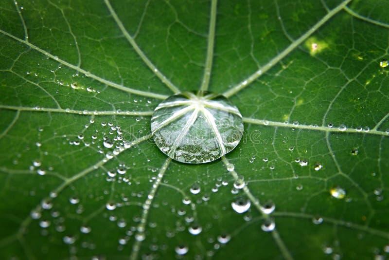 Groen blad met dauw stock foto