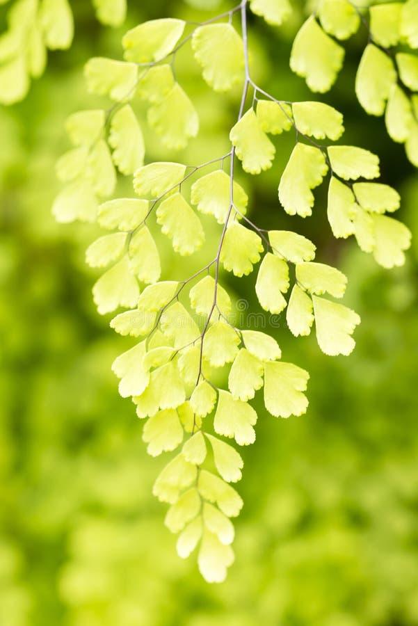 Groen blad met het licht van de ochtendzon met groene bosachtergrond stock foto's
