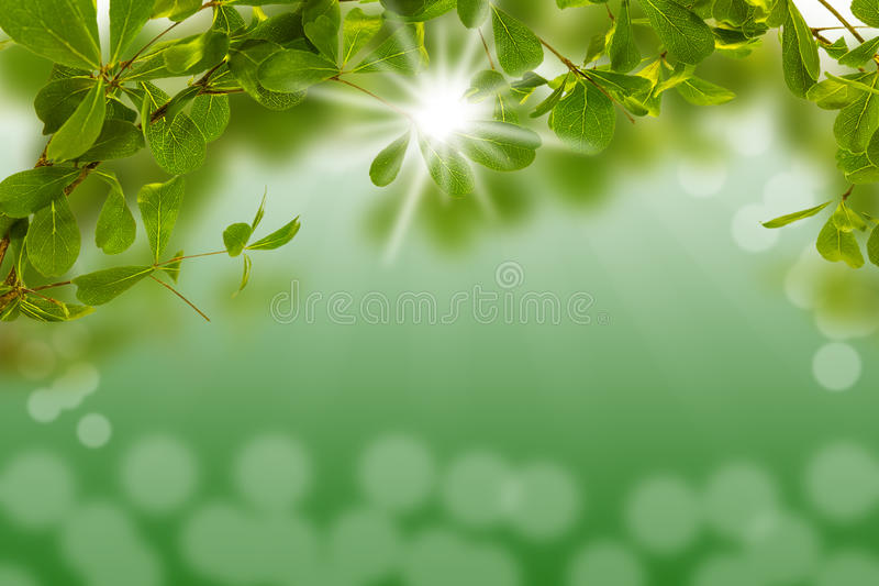 Groen blad met licht bokeh en over licht de zon stock afbeelding