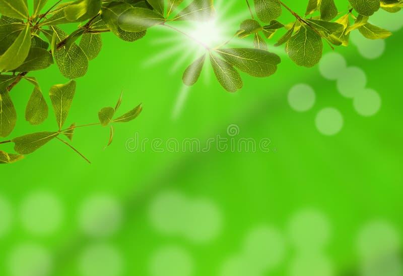 Groen blad met licht bokeh en over licht de zon royalty-vrije stock afbeeldingen