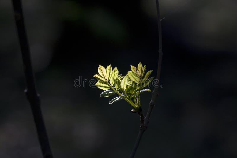 Groen blad met schijnwerper in bos in detail stock foto's