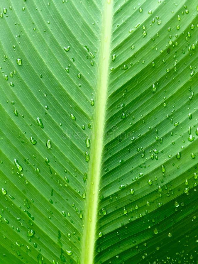groen blad met waterdalingen royalty-vrije stock afbeelding