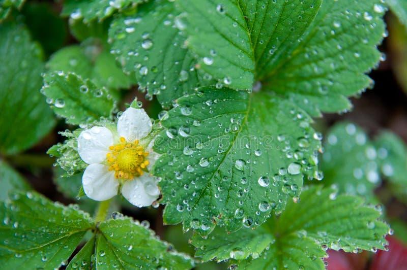 Groen blad met waterdalingen en bloem stock foto's