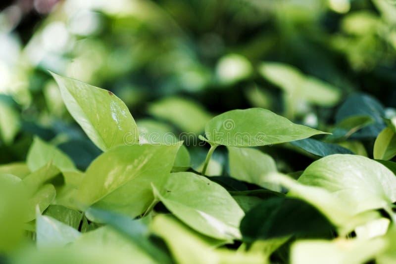 Groen blad op de zomerachtergrond royalty-vrije stock foto's