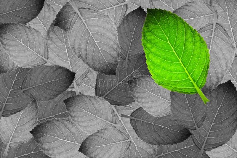 Groen blad op grijs blad stock fotografie