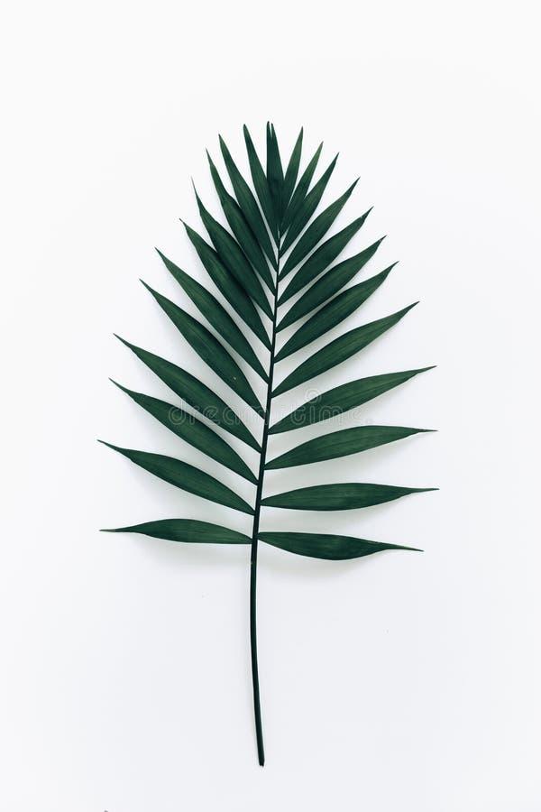 Groen blad over witte achtergrond royalty-vrije stock afbeeldingen