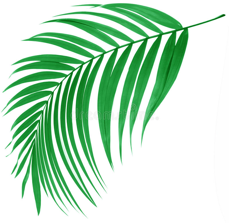 Groen blad van palm stock illustratie