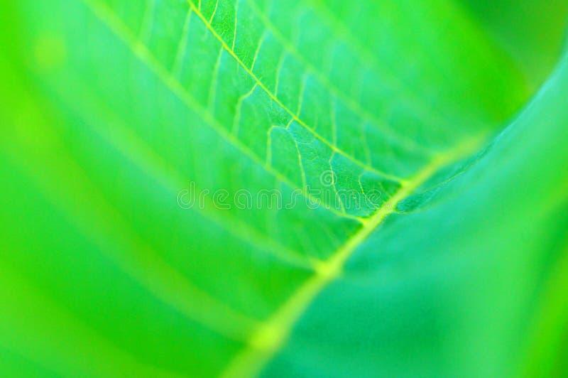 Groen bladdetail stock foto