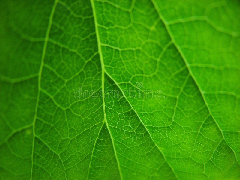 Groen bladerendetail royalty-vrije stock afbeelding