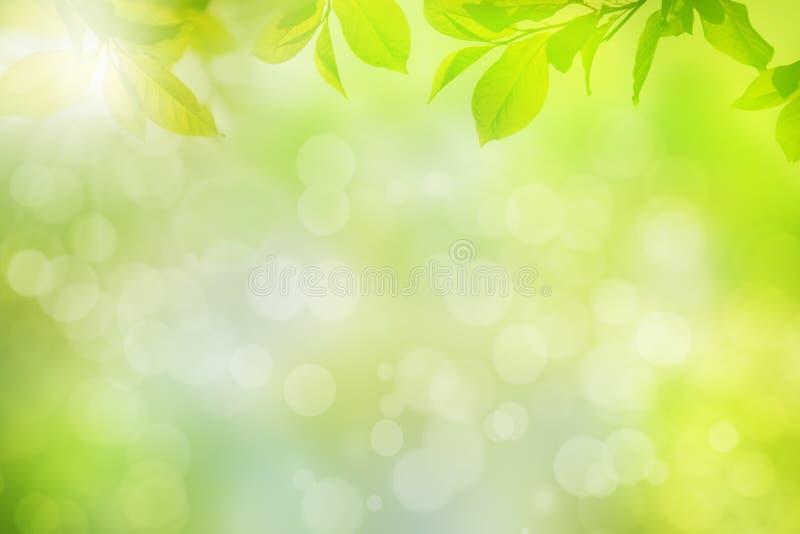 Groen bladerenkader op natuurlijke achtergrond royalty-vrije stock fotografie