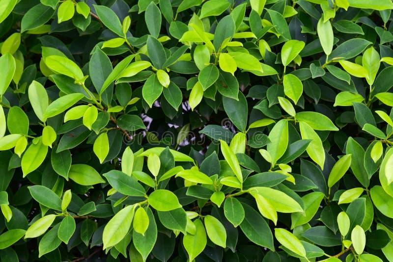 Groen bladerenpatroon voor achtergrond royalty-vrije stock afbeeldingen