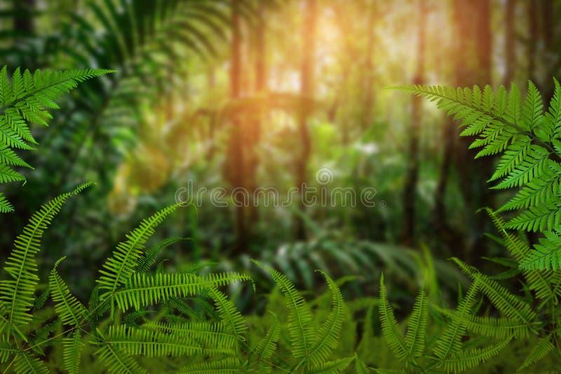 Groen bomen en bladgroen royalty-vrije stock afbeelding