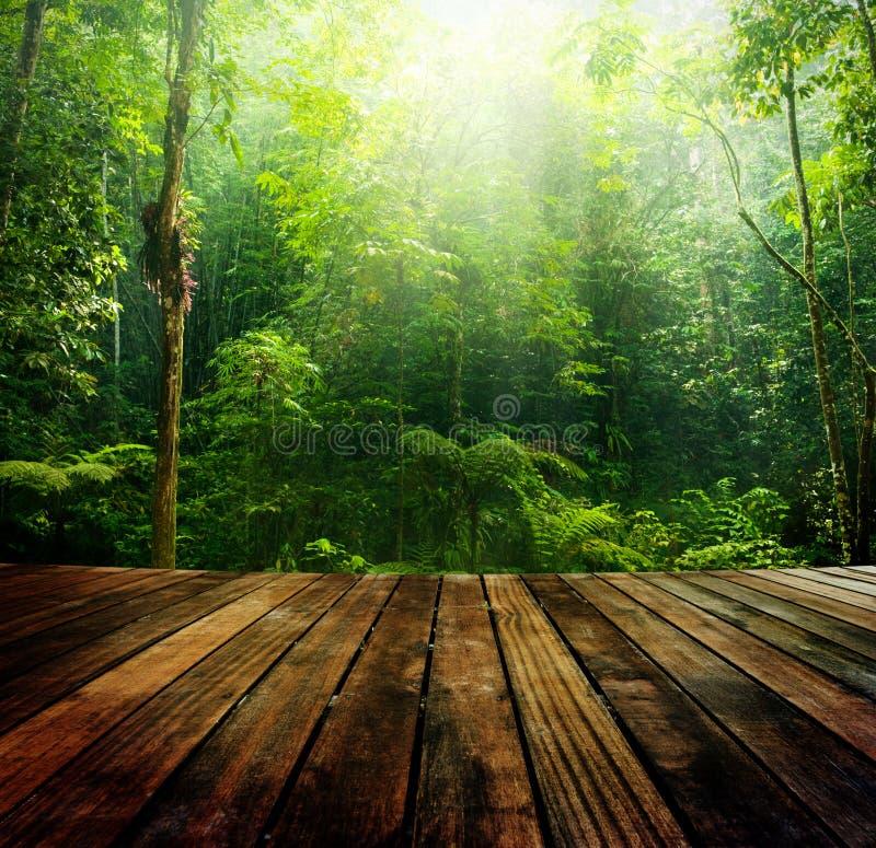 Groen bos. stock foto's