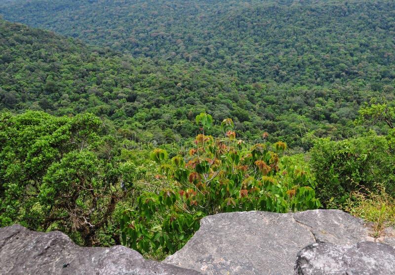 Groen bos bij het Nationale Park van Bokor in Kampot, Kambodja stock foto's