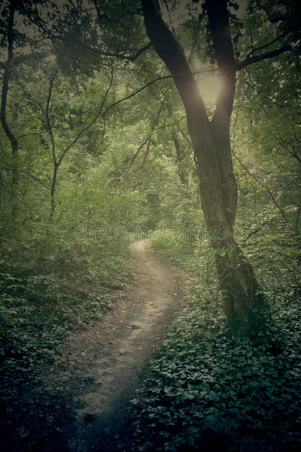 Groen bos met lvy en boom royalty-vrije stock foto