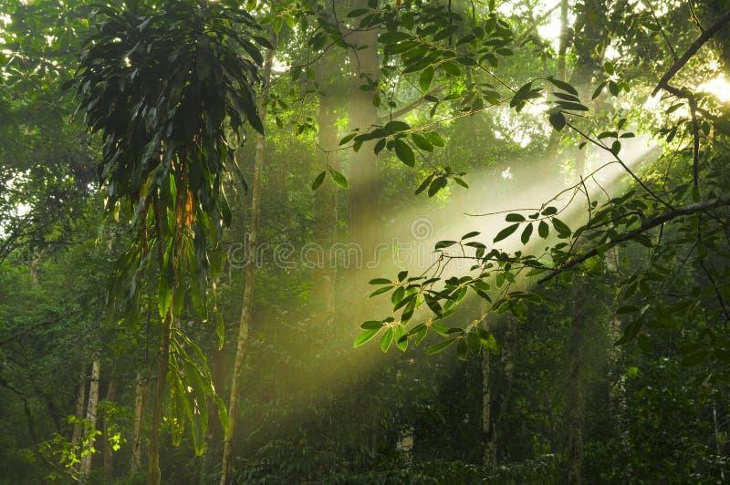 Groen bos met straal van lichten stock foto's