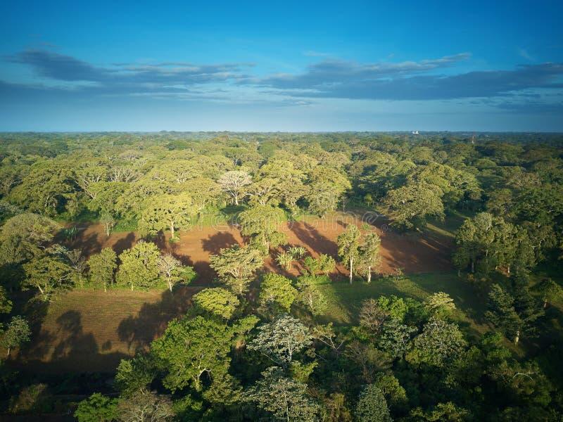 Groen bos in Nicaragua royalty-vrije stock fotografie