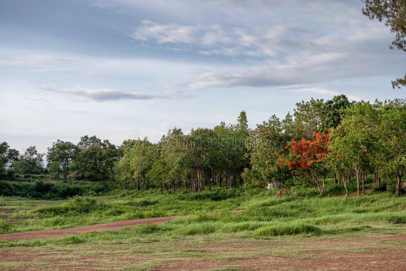 Groen bos in regenwoud met blauwe hemel royalty-vrije stock afbeeldingen