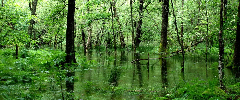 Groen bos in Wales royalty-vrije stock foto