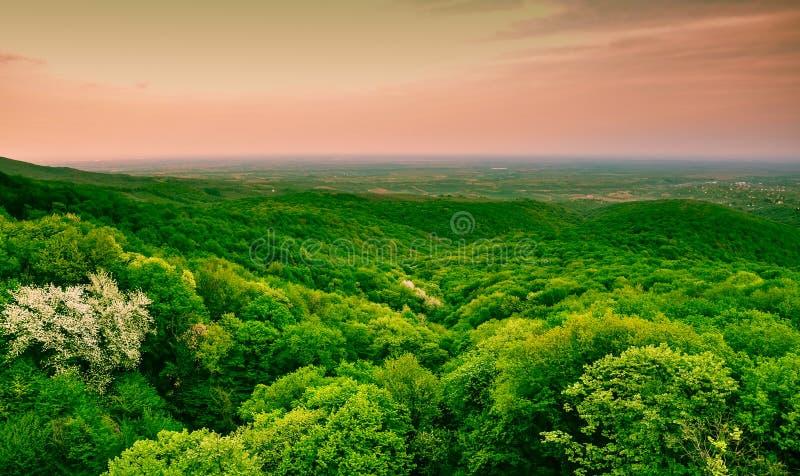 Groen bospanorama royalty-vrije stock fotografie