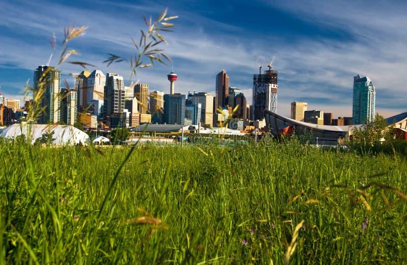 Groen Calgary stock afbeeldingen