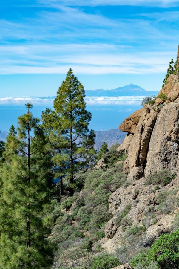 Groen Canarisch pijnboomboom en Bergenlandschap op Gran Canaria-eiland, mening op Onderstel Teide, Tenerife, Kanarie, Spanje stock afbeelding