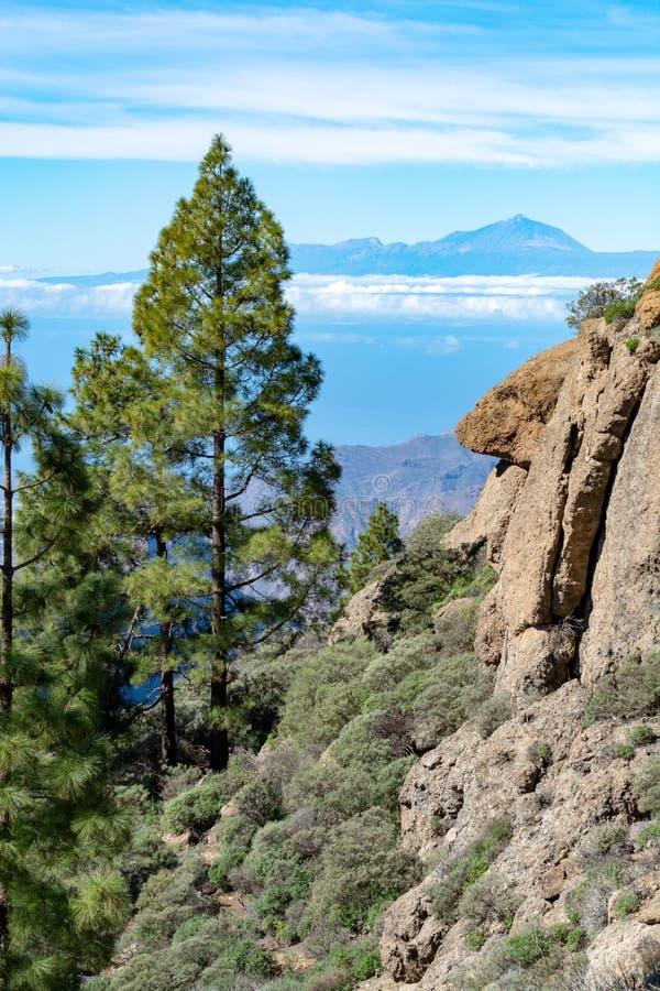 Groen Canarisch pijnboomboom en Bergenlandschap op Gran Canaria-eiland, mening op Onderstel Teide, Tenerife, Kanarie, Spanje royalty-vrije stock foto