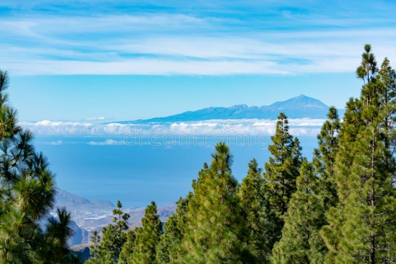 Groen Canarisch pijnboomboom en Bergenlandschap op Gran Canaria-eiland, mening op Onderstel Teide, Tenerife, Kanarie, Spanje stock foto's