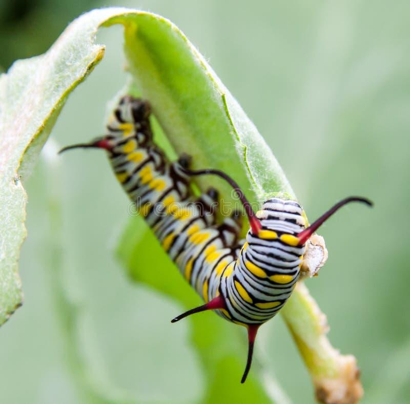 Groen Caterpillar stock foto
