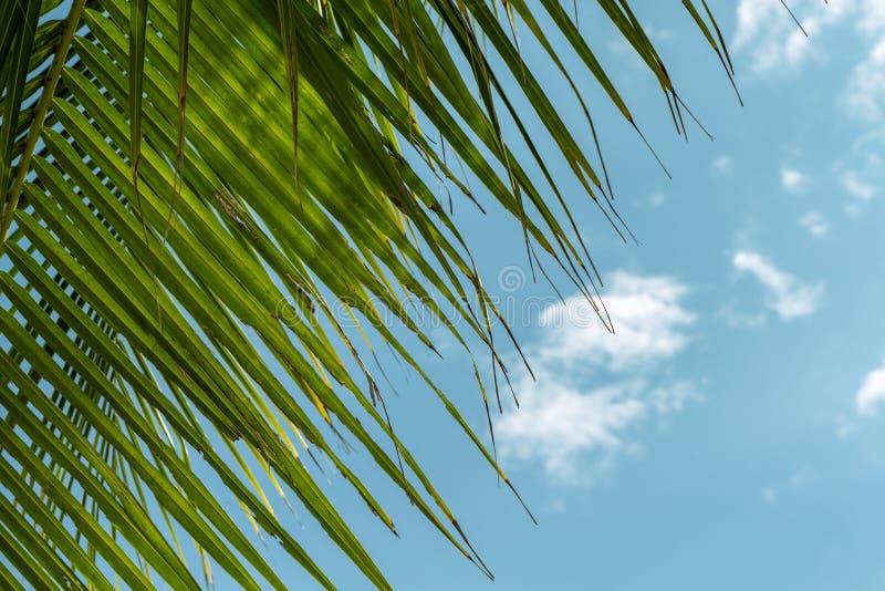 Groen cocopalmblad op blauwe hemelachtergrond Het ontspannen tropische detail gestemde foto Exotische plaats voor vakantie royalty-vrije stock foto's