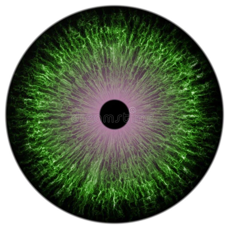 Groen colorized oogtextuur stock illustratie