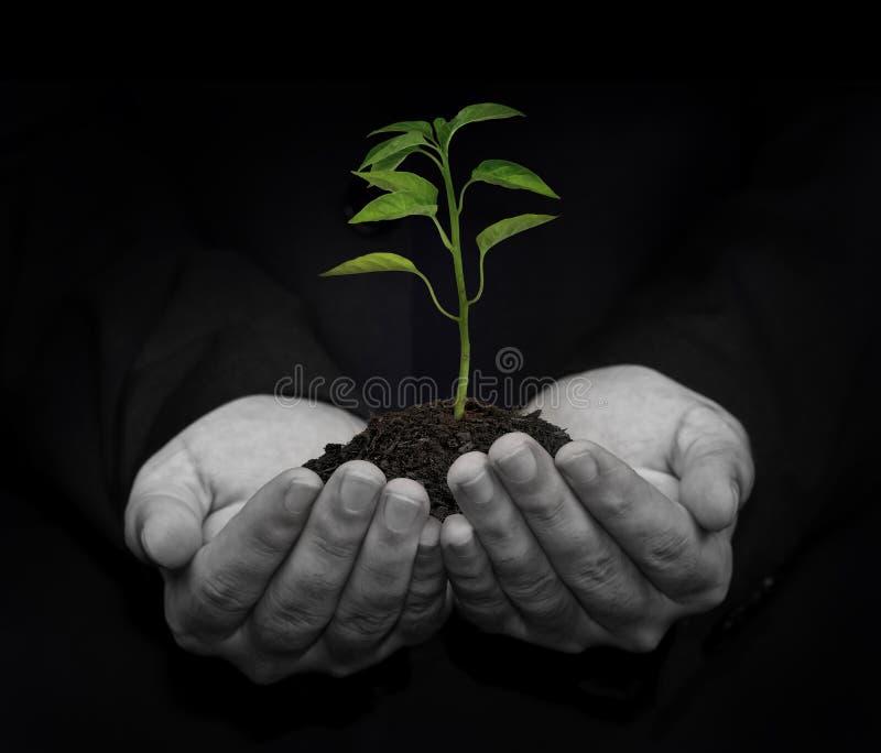 Groen concept royalty-vrije stock foto's
