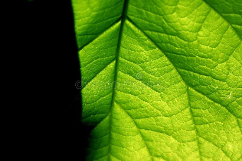 Groen Contrast Royalty-vrije Stock Afbeeldingen